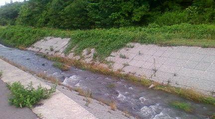 長江川(武右衛門はこの川周辺で加茂湖の主に遭遇)2009年7月20日のりくん撮影