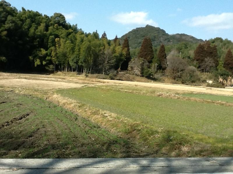 築地周辺(紅子2012年1月24日撮影)