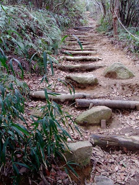 初寅詣への参道の坂道?(araya氏撮影、20120303)