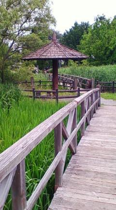 えびの子水苑(長者が治水した辺り)2008年7月6日のりくん撮影