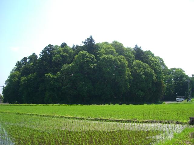 水田の中の千駄塚(2012年5月27日、マルコ撮影)