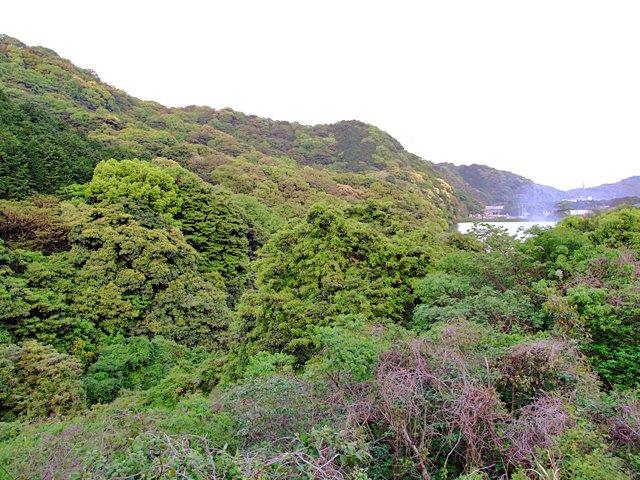 横の大木はイチョウで、開山当時に植?えられたものの二代目ではないかと言われています。(araya撮影、2012年5月6日)