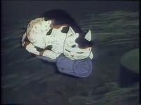 五郎右衛門の猫